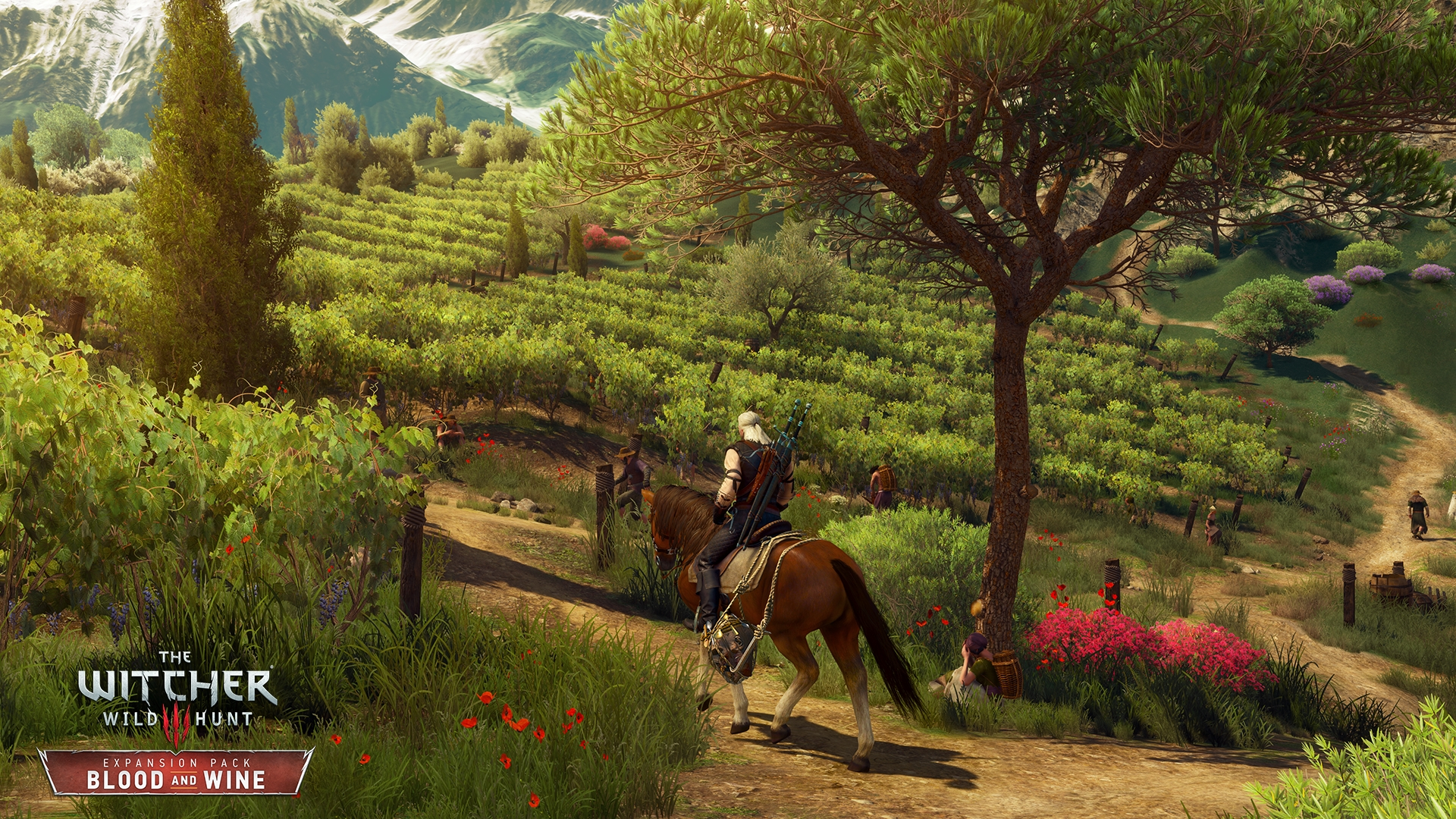 Witcher 3: Blood & Wine - Corvo Bianco Vineyard Upgrades Guide