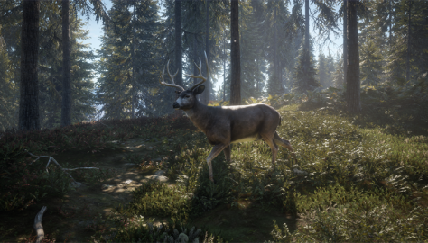 theHunter: Call of the Wild Gets a Brand New Release Trailer