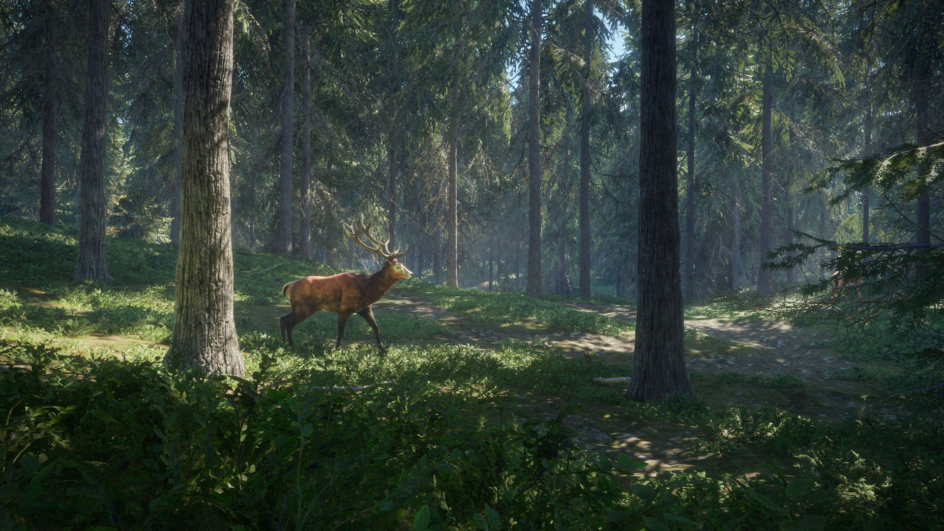TheHunter Call of the Wild Wallpapers in Ultra HD 4K