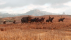 RDR2 Pic 2