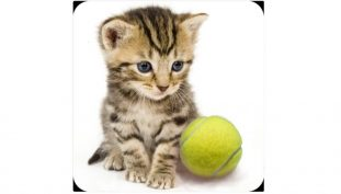 Daily Deal: Kitten And Tennis Ball Avatar Is Free On US PSN
