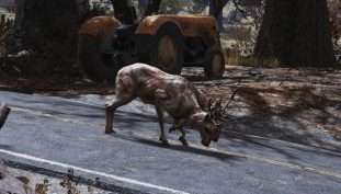 Fallout 76 Observant Radstags Will Lead You To Treasure